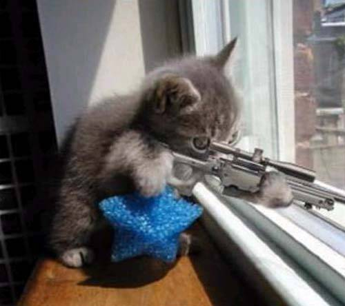 Name:  sniper_cat.jpg
