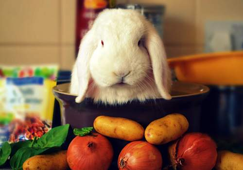 Click image for larger version.  Name:rabbit_stew_by_water_avian-d4to8lp.jpg Views:13 Size:78.5 KB ID:328986