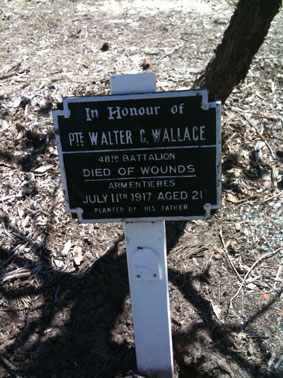 Trees planted in memory of fallen WW1 Australian soldiers