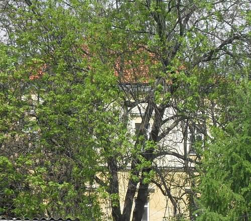 Lower castle 4.jpg