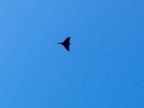 The one and only just flew over......