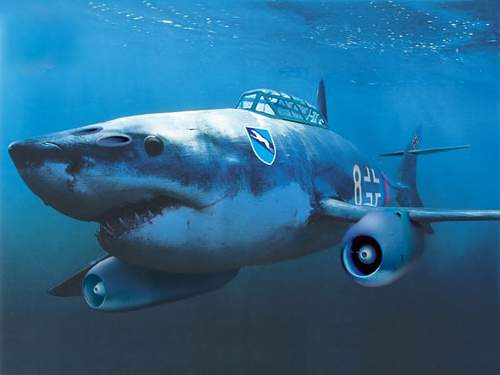 Click image for larger version.  Name:Shark me 262.jpg Views:626 Size:65.3 KB ID:626589