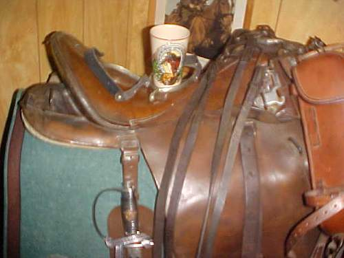 Equestrien cup