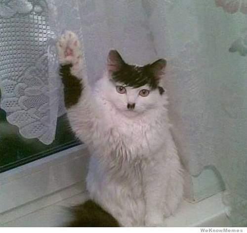 Click image for larger version.  Name:hitler-cat.jpg Views:55 Size:33.1 KB ID:622020