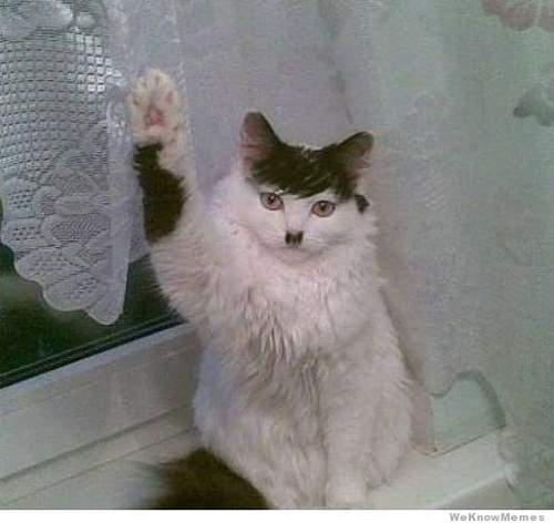 Click image for larger version.  Name:hitler-cat.jpg Views:70 Size:33.1 KB ID:622020