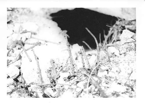 munich 1967 005.jpg