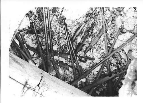 munich 1967 006.jpg