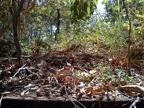 Darwin Area