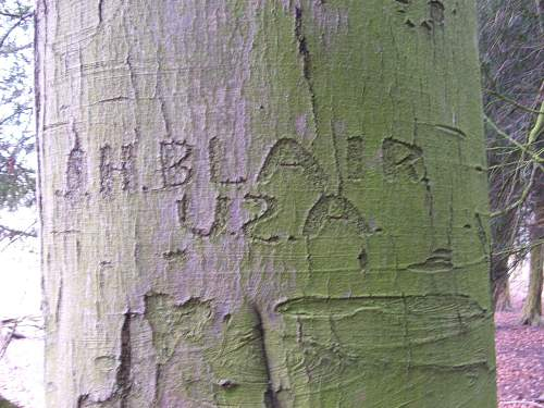 A US Army camp in England that still lives ! (Two World Wars of GI tree graffiti)