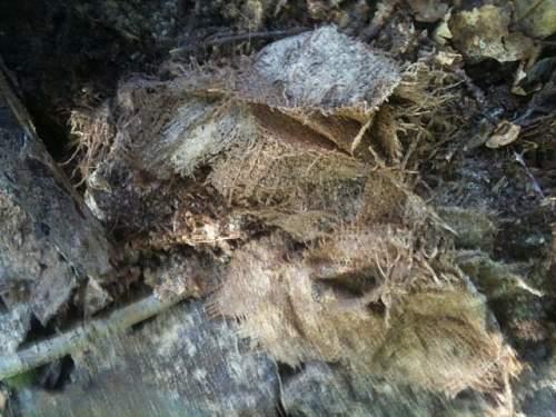 Back on the Encampment more finds!