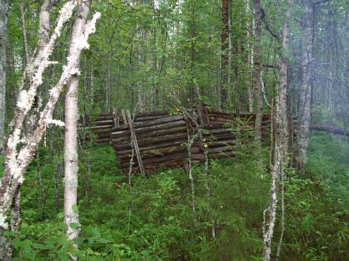 From Russian forests...