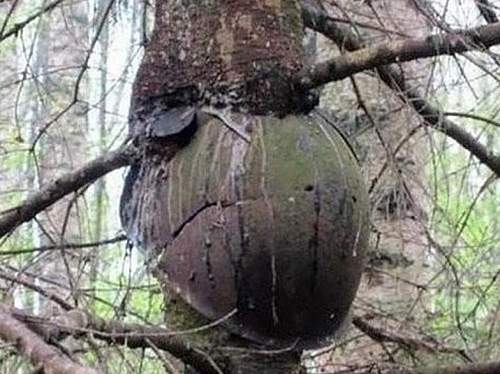 helmet-tree (2).jpg