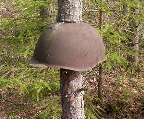 helmet-tree.jpg