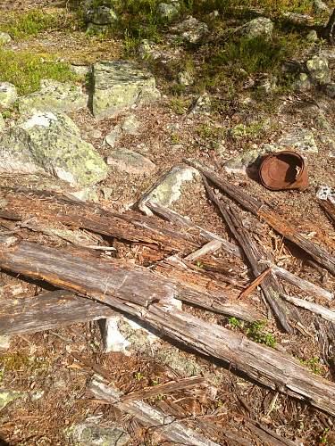 Swedish woods!
