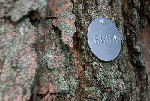 tree_tag100913b004_lg.jpg