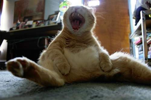 Click image for larger version.  Name:Laughing-cat.jpg Views:704 Size:68.7 KB ID:317616