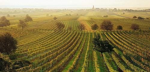 Click image for larger version.  Name:weinbaugebiet-jois-burgenland--o.jpg Views:3 Size:95.7 KB ID:917860