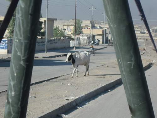 Click image for larger version.  Name:cow_borne_ied.JPG Views:44 Size:232.2 KB ID:58536