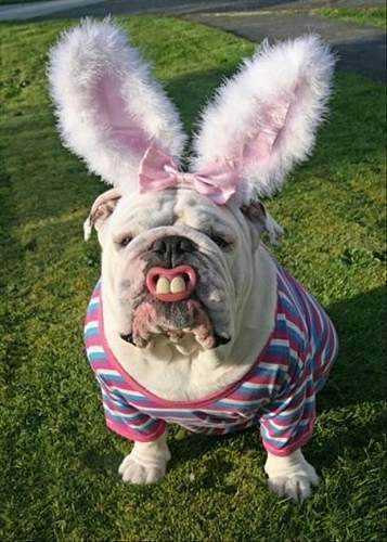 Click image for larger version.  Name:funny-easter-bunny-quotes-3.jpg Views:2204 Size:83.2 KB ID:824570