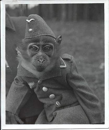 Name:  monkey_luftwaffe_wehrmacht_uniform_funny.jpg Views: 211 Size:  23.3 KB