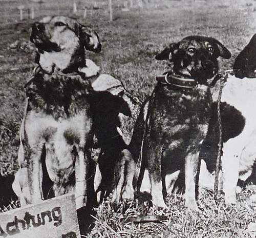 Animals at War - Carrier Pigeons, War dogs, Cavalry, etc - Reference thread - What have you got?
