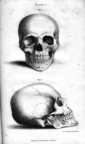 Click image for larger version.  Name:Plate_Vb_Human_Skull,_engraving_by_William_Miller_after_drawing_by_W_Miller-2.jpg Views:732 Size:230.8 KB ID:603970