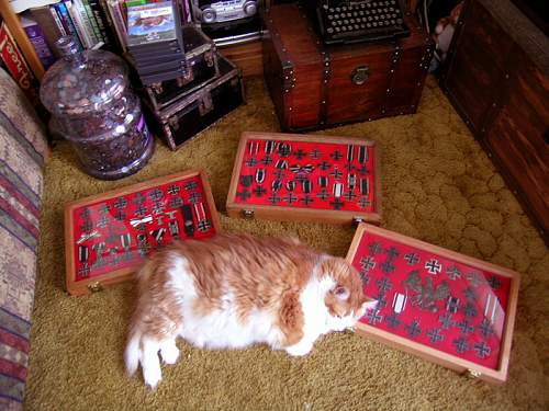 Click image for larger version.  Name:Buddy the guard cat.jpg Views:21 Size:68.3 KB ID:705351
