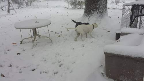 Click image for larger version.  Name:snow 2.jpg Views:5 Size:133.0 KB ID:905883