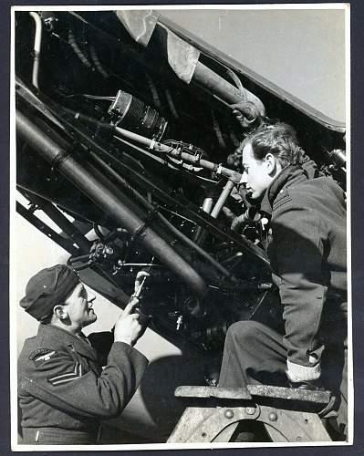 Who is who ? ( No. 29 Squadron ).