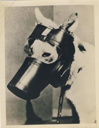 WWII U.S. War Dog Gas Mask