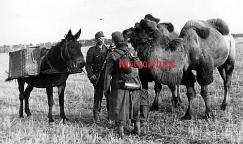 Click image for larger version.  Name:mulicamelskf6.jpg Views:88 Size:71.6 KB ID:12405