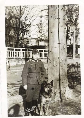 Click image for larger version.  Name:Shaferhund Soldat- Dog soldier 001_final.jpg Views:462 Size:240.9 KB ID:181804