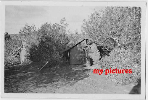 Click image for larger version.  Name:new trop pic 7 b.JPG Views:196 Size:203.1 KB ID:190478