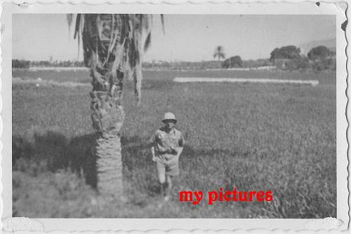 Click image for larger version.  Name:new trop pic 2 b.JPG Views:147 Size:141.4 KB ID:190482