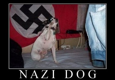 Post your dog photos!