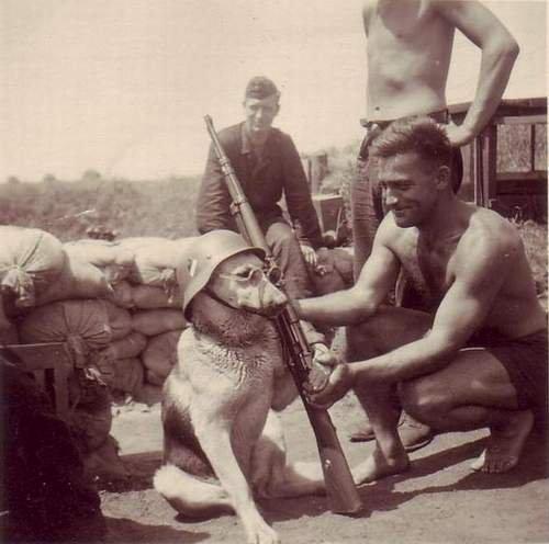 Deutsche Hund