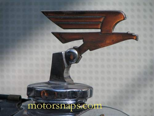 Eagle from car or mortorbike?