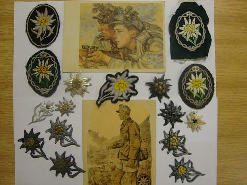 OPINIONS needed for Edelweiss insignia!!!!