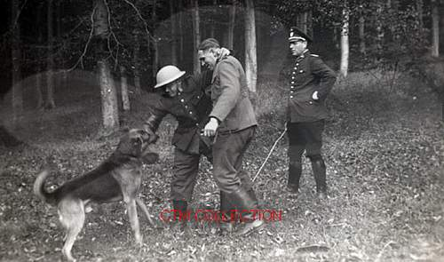 Training a German Sheppard attack dog. Are they training him to attack British/Canadian soldiers?