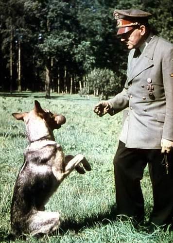 Click image for larger version.  Name:Hitler und Blondi.jpg Views:9317 Size:95.6 KB ID:314834