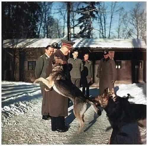 Click image for larger version.  Name:hitler-dog-blondi-rare-photos.jpg Views:32814 Size:64.7 KB ID:314978