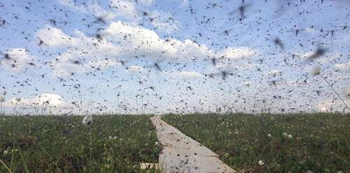 Click image for larger version.  Name:mozzies.jpg Views:48 Size:84.9 KB ID:969801