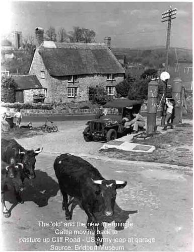 Click image for larger version.  Name:Cows and jeep at garage Web.jpg Views:136 Size:32.2 KB ID:559539