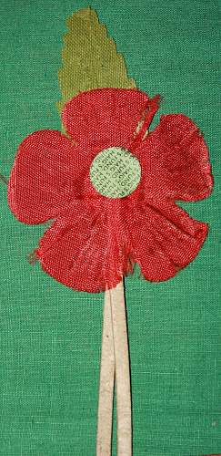 The humble poppy
