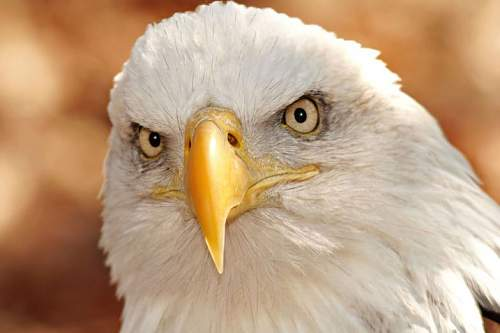 Click image for larger version.  Name:eagle.jpg Views:27 Size:56.3 KB ID:834403