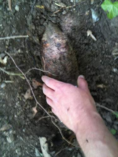 ID of projectile found