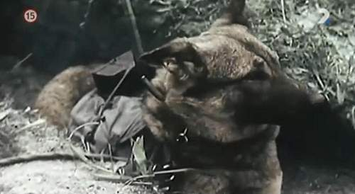 Russian Anti-Tank Dog Mines
