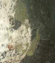 Name:  gummi1052.jpg Views: 79 Size:  28.5 KB