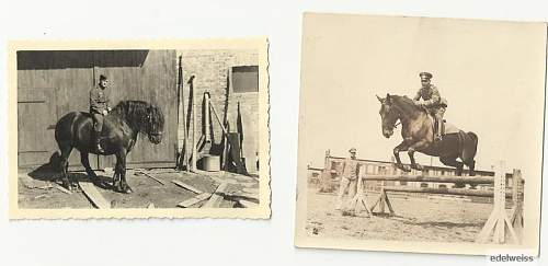 Click image for larger version.  Name:HORSE.jpg Views:22 Size:39.9 KB ID:464465