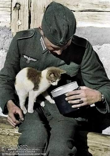Click image for larger version.  Name:Cat+with+Wehrmacht+officer.jpg Views:1847 Size:56.7 KB ID:598255